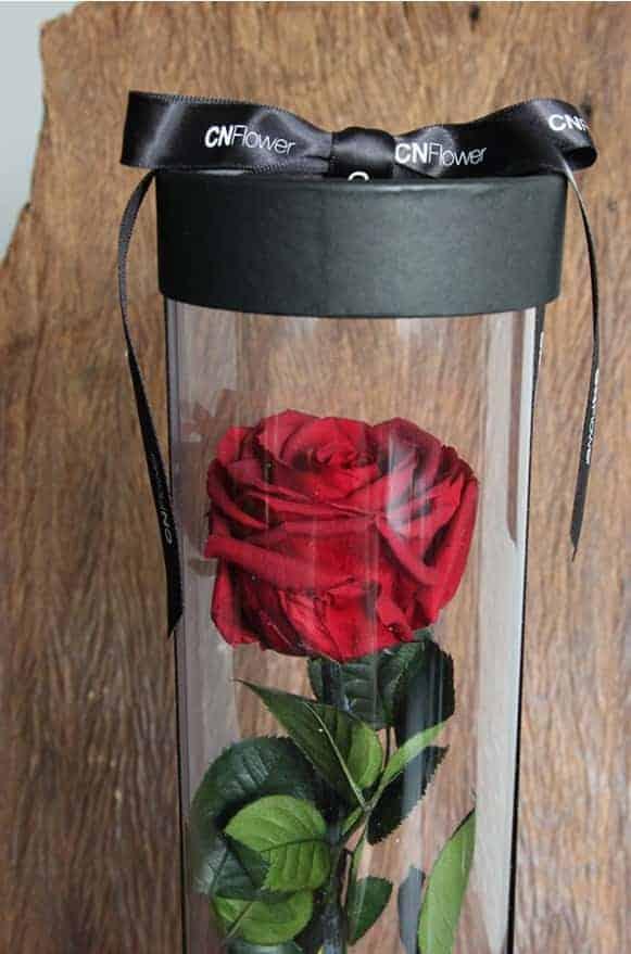 A12BXFF48玫瑰宣言-櫻桃紅1480-1