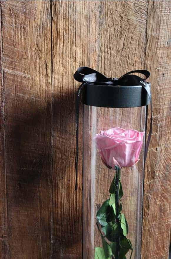 A12BXFF48玫瑰宣言-粉紅1480-1