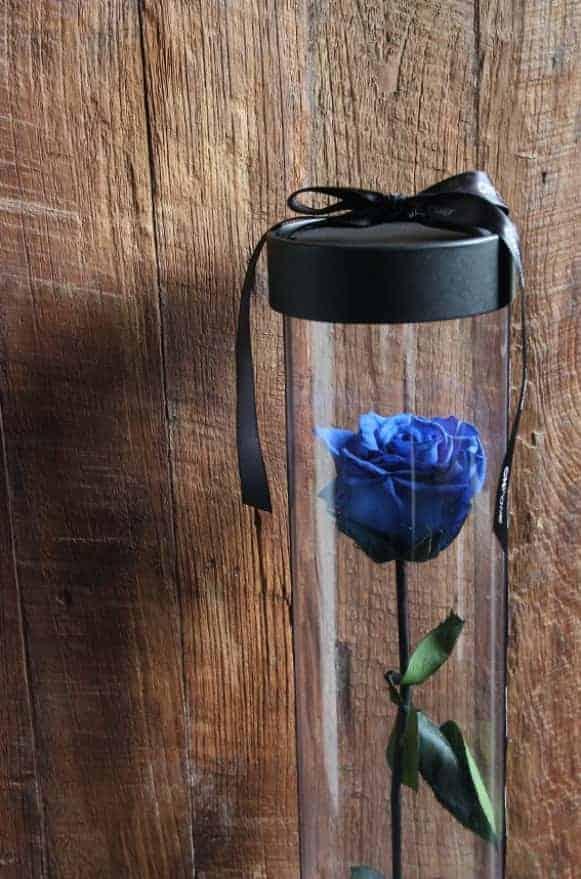 A12BXFF48玫瑰宣言-藍1480-1