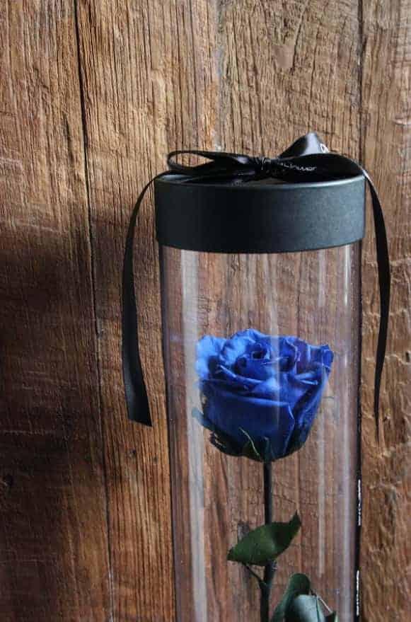 A12BXFF48玫瑰宣言-藍1480-2