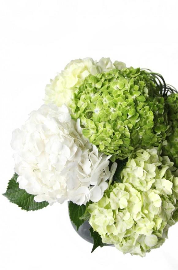 A02GLGG04春綠 繡球盆花4000 (2)
