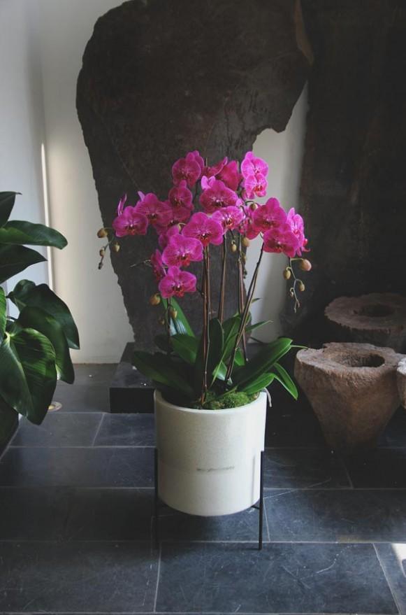D05POWW02P芬芳庭園-小型落地蘭花8000-桃-3