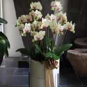 D05POWW02Y芬芳庭園-小型落地蘭花8000 黃 (3)
