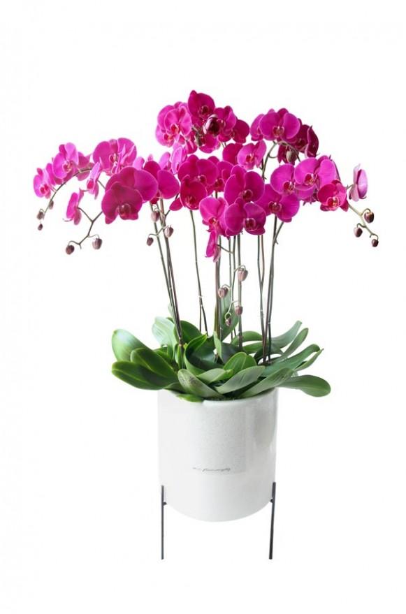 D05POWW03P蘭之芳庭-桃 落地蘭花 (3)