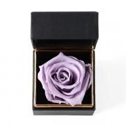 A12BXFF55SL戒盒紫丁香480-3