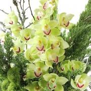 A02GLGG06青山亞蘭大型盆花12000 (3)