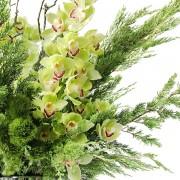 A02GLGG06青山亞蘭大型盆花12000 (4)