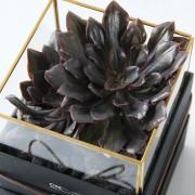 D03BXGG02綠驚喜-植物金框禮盒組2200 (1)