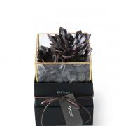 D03BXGG02綠驚喜-植物金框禮盒組2200 (2)