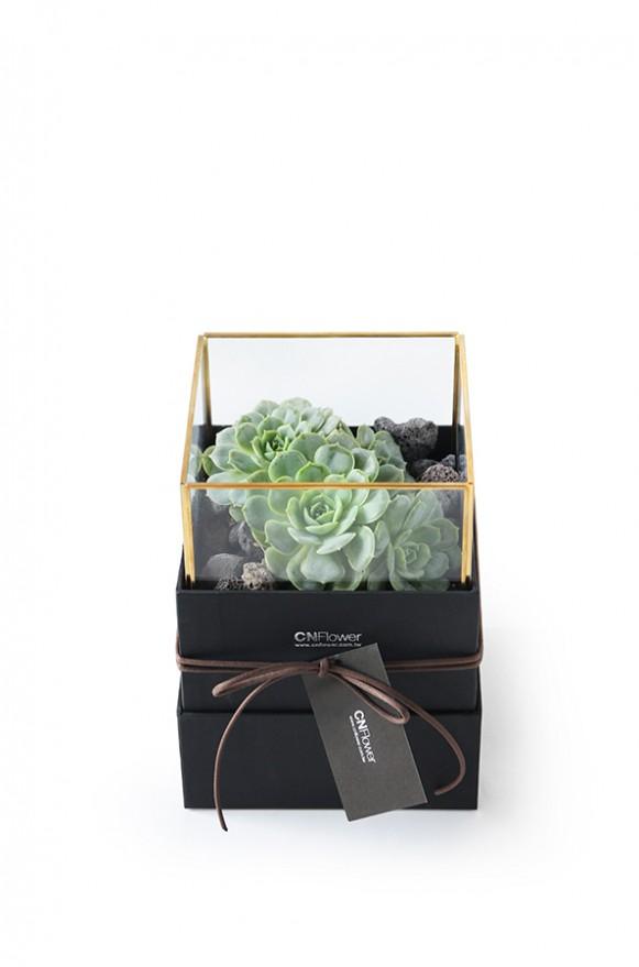 D03BXGG02綠驚喜-植物金框禮盒組2200 (3)