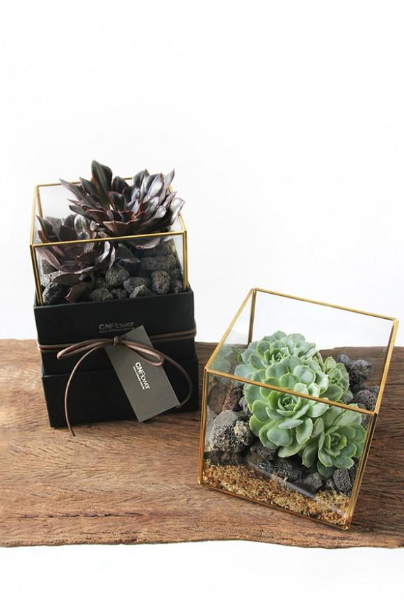 D03BXGG02綠驚喜-植物金框禮盒組2200 (4)