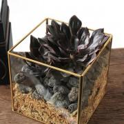 D03BXGG02綠驚喜-植物金框禮盒組2200 (5)