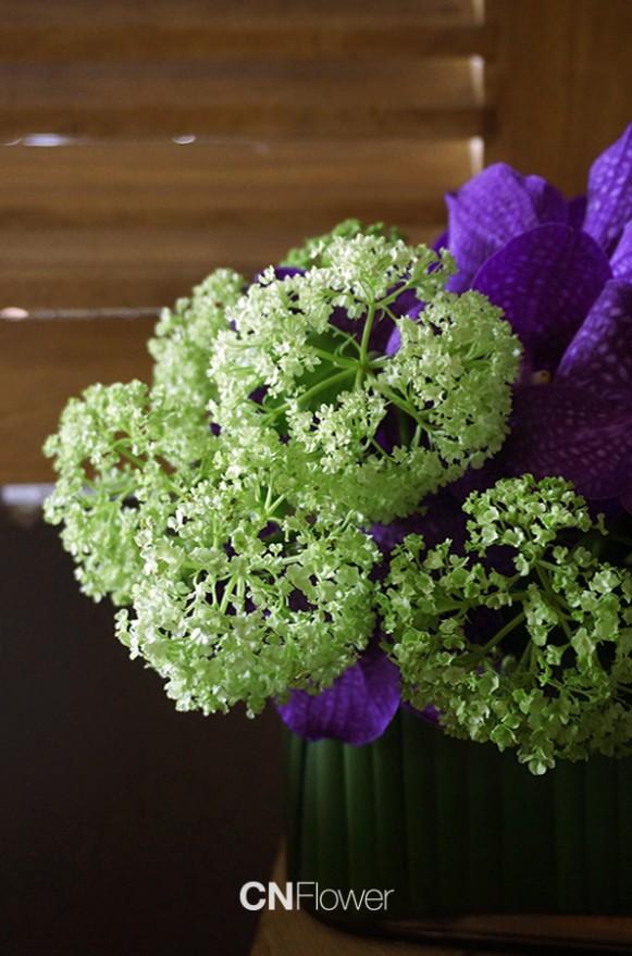 A02GLLL03-紫萬代春櫻盆花-3500-2