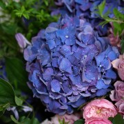 A02GLFF14BP_華麗之夏 落地盆花_22000(6)