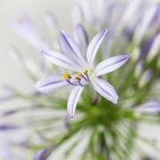 A02GLFF14BS_初夏 盆花_4500(5)