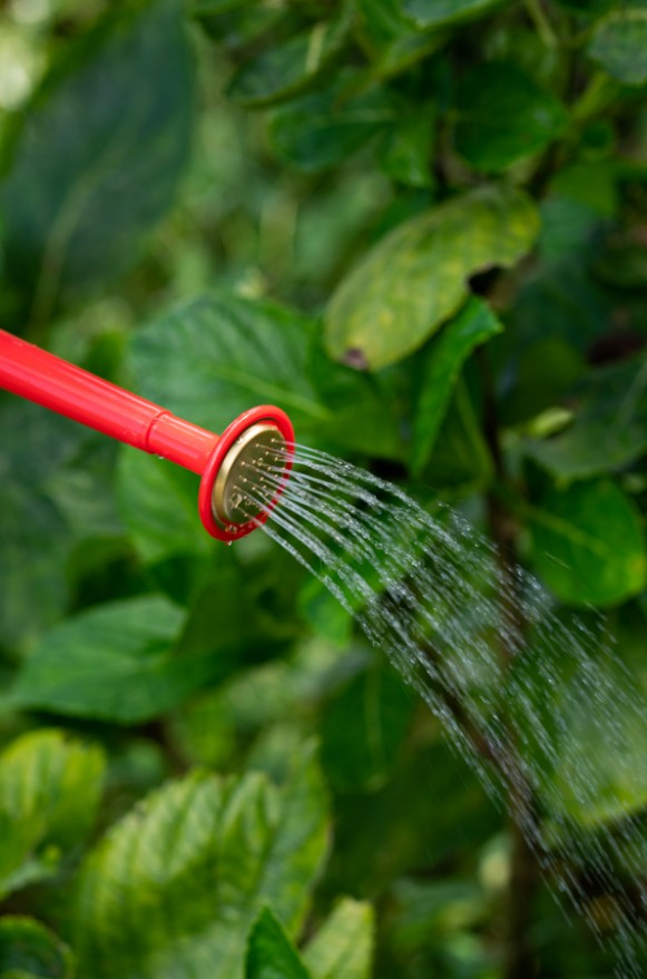 100-2-RED_紅色小型塑膠經典澆水壺1L_580(6)