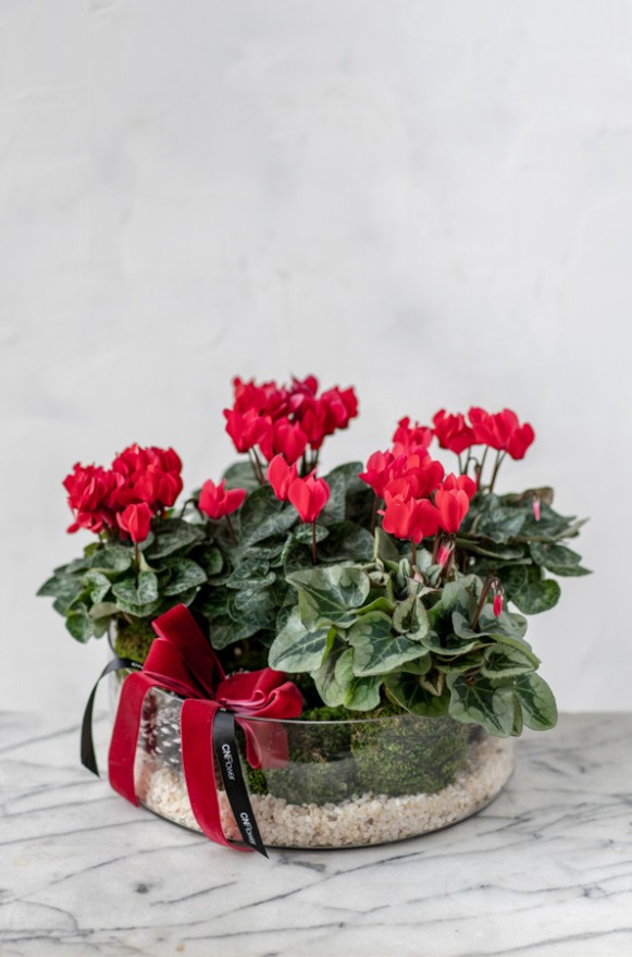 B0102191127_紅花暖冬 植栽_2280 (2)