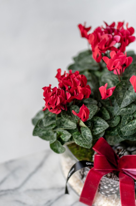 B0102191127_紅花暖冬 植栽_2280 (3)